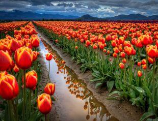 Fedezd fel Európa virágoskertjét, irány Hollandia!